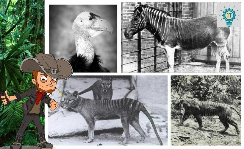 steve mccarthy rejtvény - kihalt állatok